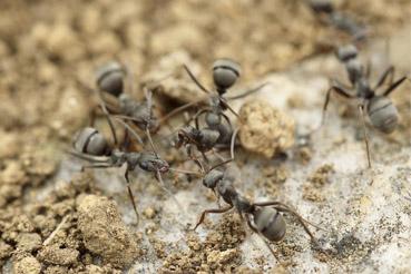 Evidencias de hormigas