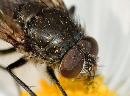 imagen de moscas