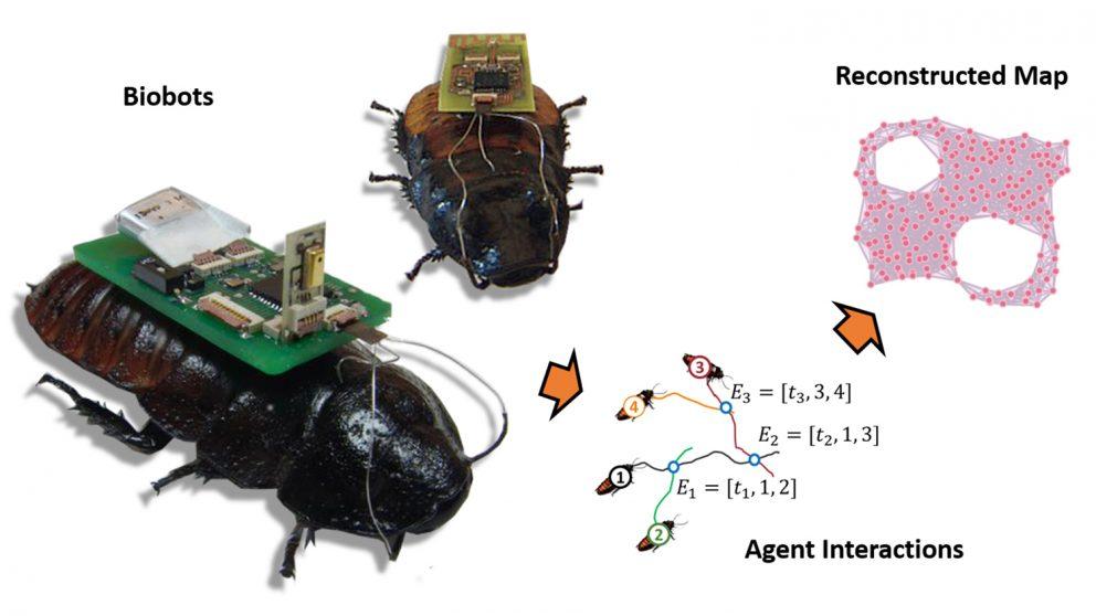 Cucarachas cyborg  y drones para crear mapas de zonas catastróficas