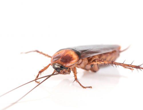 6 curiosidades sobre las cucarachas que deberías conocer